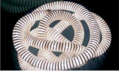 Boalum Artemide